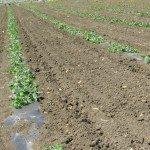 soluzioni per l'agricoltura.008