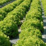 soluzioni per l'agricoltura.009