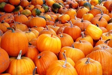 Halloween campaign to save 12.8 million pumpkins from waste