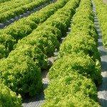 soluzioni per l'agricoltura.001