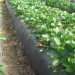 soluzioni per l'agricoltura.002