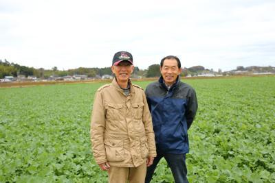 Colza, la pianta che colora di giallo la speranza di Fukushima