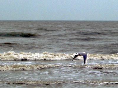 Isole artificiali e zone protette, ipotesi allo studio per la sicurezza nei mari