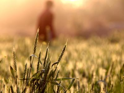 Salute vegetale, danni al 20-40% dei raccolti globali da parassiti e malattie