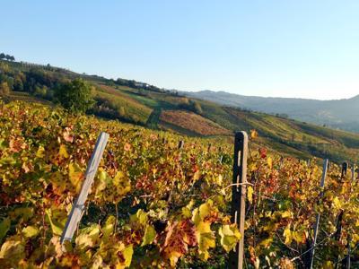 Boom del vino bio, in due anni raddoppiati consumatori in Italia