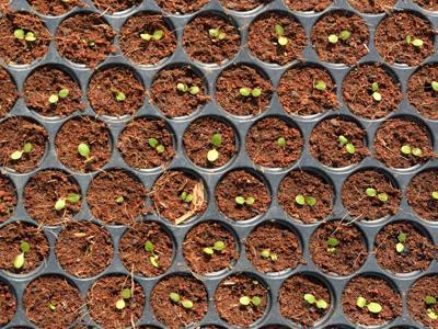 Cibo e tecnologia, a Seeds&Chips tutta la Food Innovation dal campo alla tavola