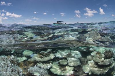 Barriere coralline addio entro il 2050 e un Mediterraneo invaso da meduse