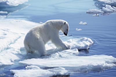 Artico bollente, si sta scaldando due volte più in fretta del resto del pianeta