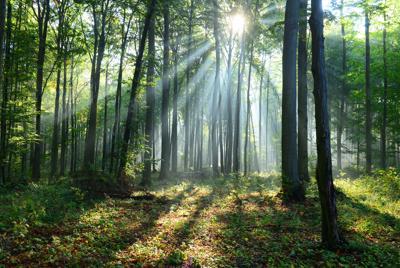Foreste, le 'spugne' di Co2 che salveranno il mondo