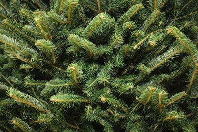 'Verde' Natale: 5 regole da seguire per scegliere l'albero rispettando l'ambiente