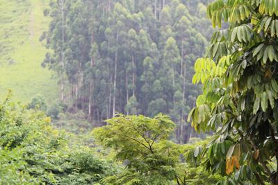 La sfida del clima e della sostenibilità: i benefici del settore agroforestale