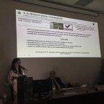 pacciamatura-con-telo-biodegradabile-in-bioplastica-mater-bi-su-riso-6