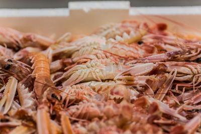Per l'Adriatico 'non c'è scampo'. Pesca giù del 54% in 5 anni