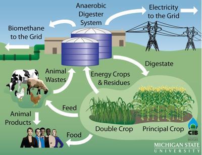 Biogas, doppie colture enorme potenziale per produzione sostenibile