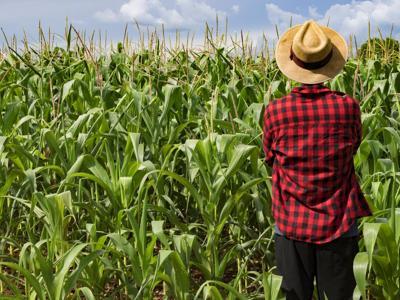 Innovazione, dall'agritech +20-30% di produttività per aziende agricole