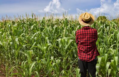 Emissioni di gas serra, +20% per quelle da agricoltura dal 1990 a oggi