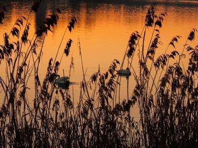 '#WithNature', oggi è la Giornata Mondiale dell'Ambiente