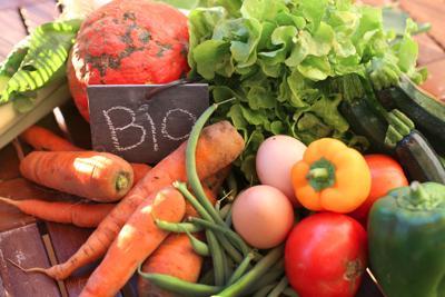 Più ettari coltivati e più operatori, cresce il bio italiano