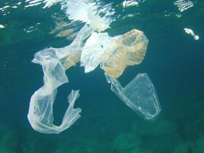 Mare di plastica, specie aliene viaggiano sulle 'rotte' dei rifiuti