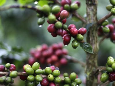 Equo e solidale, vendite globali prodotti Fairtrade a 7,8 mld di euro