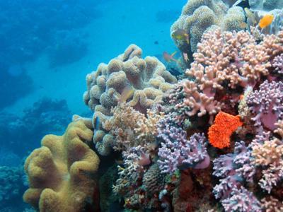 A rischio la tartaruga verde della Grande Barriera Corallina