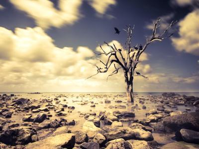 Effetto clima sui paradisi naturali, a rischio metà delle specie