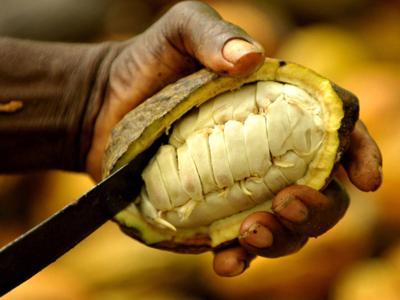 Il cacao sostenibile della Bolivia