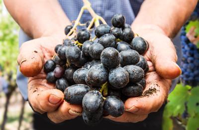 E' boom vino biologico