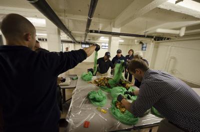 Raccolta umido, New York copia il modello italiano