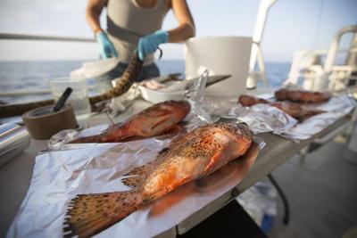 Microplastiche anche in pesci e invertebrati