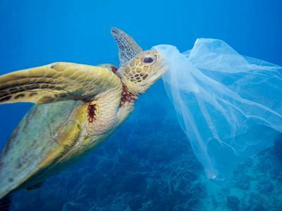 Marine litter, Mediterraneo in 'trappola'