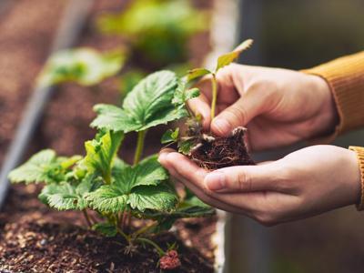 Ambiente, società ed economia: gli orti urbani fanno bene