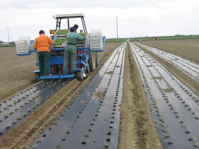 Agricoltura, ecco tutte le soluzioni a basso impatto