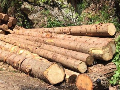 Filiera corta, territorio e ambiente: il progetto 'Legno Clima'