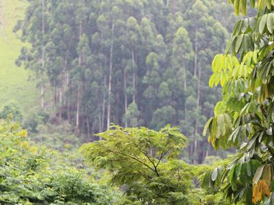 Clima, un portale per il monitoraggio delle foreste