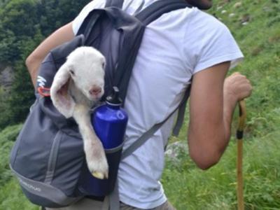 Pasturs, riparte progetto per convivenza pastori-grandi predatori