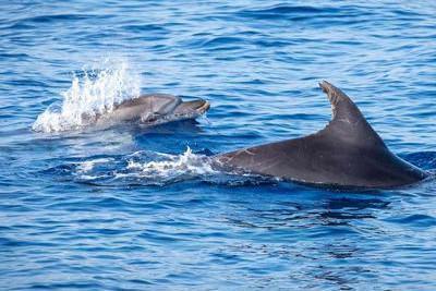 'Difendiamo il mare', tanti avvistamenti di balene e delfini nel Santuario dei cetacei